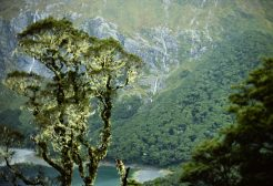 Routeburn Track - New Zealand